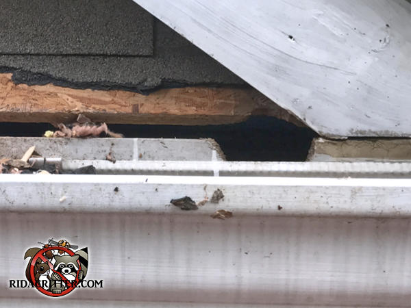 Roof rats started with a half inch gap along the edge of the roof and chewed it into a hole they could get through