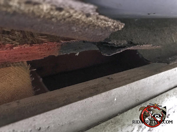 Gap of about an inch and a quarter at the edge of the roof sheathing allowed roof rats into a house in Athens Georgia