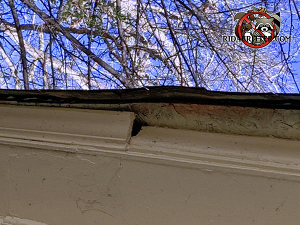 A section of the crown molding on the roof pushed against the fascia exposed a gap in the trim