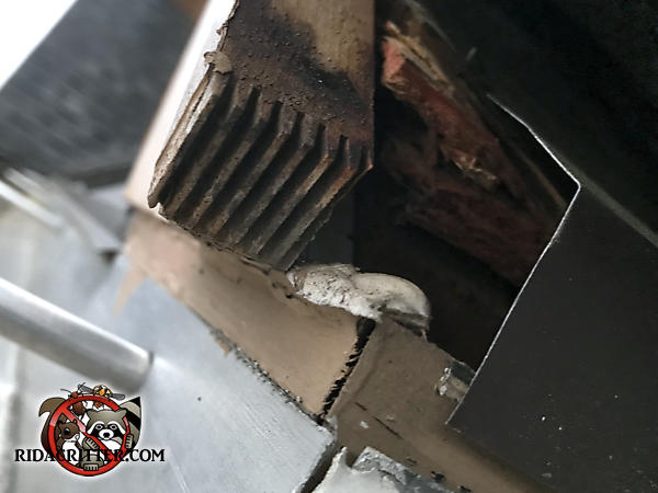 Gaps in the flashing and trim at the corner of the roof allowed roof rats to get into the attic of a house in Braselton Georgia