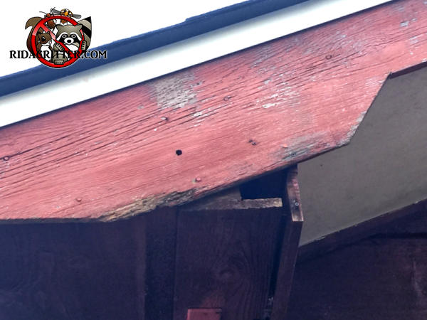The roof trim cracked and exposed a triangular hole of about two inches through which roof rats got into a house in College Park