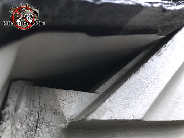 Small triangular gap under the roof flashing allowed rats into the attic of a house in Covington Georgia