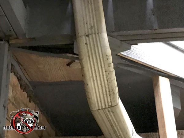 The plywood soffit panel is sagging at a corner and created a gap that roof rats used to get into a house in Atlanta