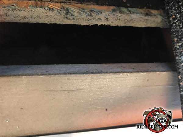 Rat entry gap of about one and three quarter inches between the roof sheathing and the fascia of a house in Hoover Alabama