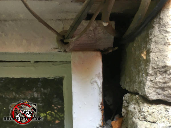 Gap of about an inch and a half between the window frame and the exterior stones allowed rats into the house