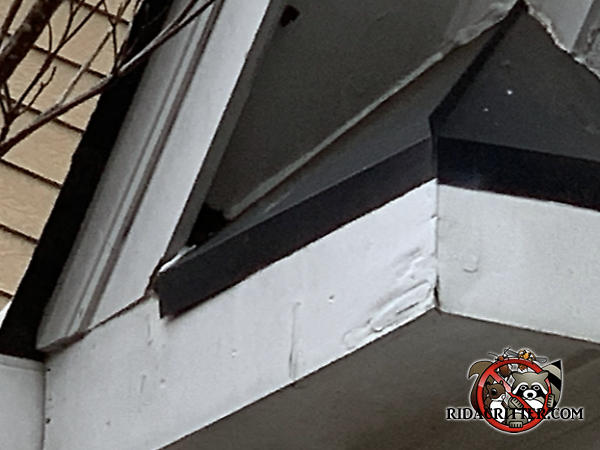 Small triangular gap in the corner of a soffit panel at a roof junction allowed roof rats to get into a house in Acworth Georgia