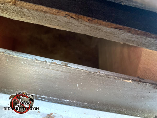 Gap of a bit more than an inch between the roof sheathing and fascia allowed rats to get into the attic of a house in Athens Georgia