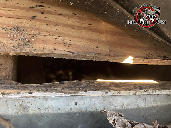 Gap between the sheathing and fascia with some gnawing on the fascia where rats got into the attic of a house in Atlanta