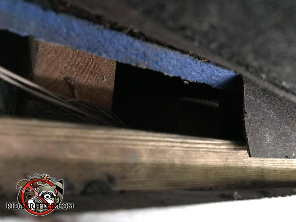 Inch and a half gap between the roof sheathing and the fascia allowed tree rats to get into the attic of a house in Atlanta