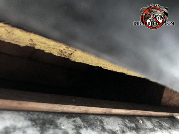Gap of less than two inches between the sheathing and the fascia of a house in Atlanta allowed roof rats into the attic