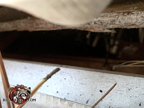 One inch gap between the roof sheathing and fascia allowed roof rats to easily get into the attic of a house in Atlanta