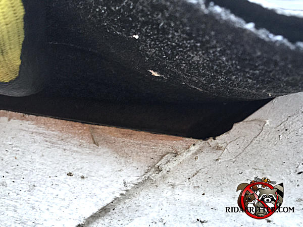 Roof rats got into a house in Atlanta through a half inch gap between the wooden trim and the shingles. There is staining under the gap.