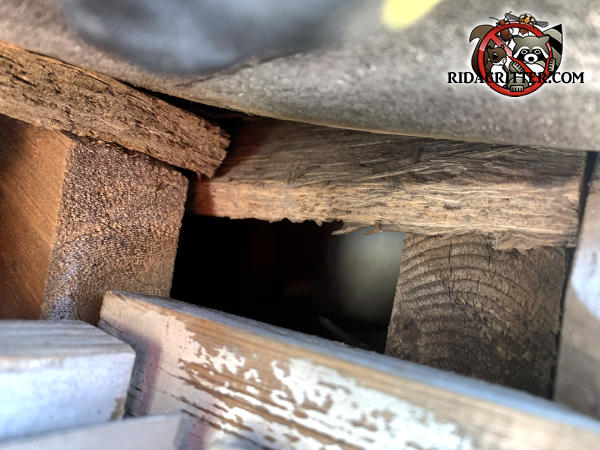 Rectangular gap in the roof framing of a house in Atlanta allowed tree rats to get into the attic of the house