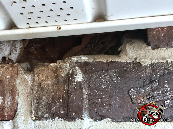 One inch by four inch gap between the soffit panel and the stained bricks of the exterior wall allowed roof rats into a house in Atlanta.
