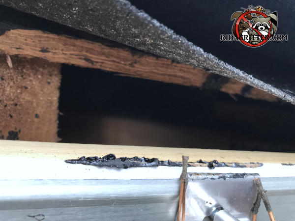 Construction gap of slightly more than an inch in the edge of the roof allowed roof rats into a house in Austell Georgia