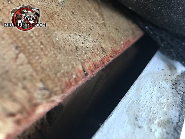 Gap of a bit over an inch in the edge of the roof sheathing allowed roof rats into the attic of a house in Bremen Georgia