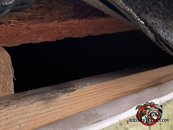 Inch and a half gap between the roof sheathing and fascia that allowed roof rats into the attic of a house in Canton Georgia