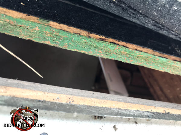 One inch gap between the roof sheathing and the fascia that allowed tree rats to get into the attic of a Chattanooga home