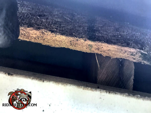 One inch gap in the edge of the roof that allowed roof rats to get into the attic of a house in Chattanooga