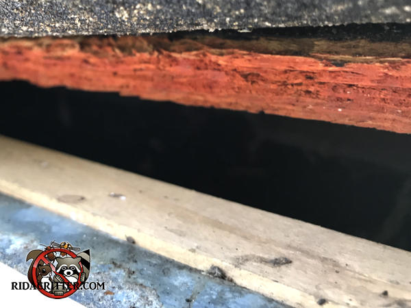 One inch gap between the roof sheathing and fascia allowed tree rats to get into the attic of a house in Chattanooga