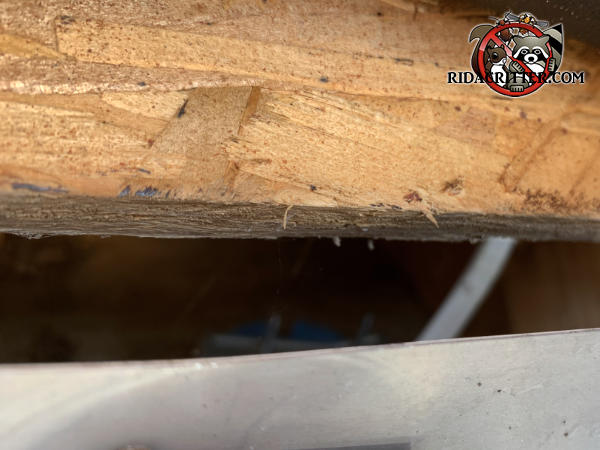 Inch and a half gap under the flake board roof sheathing that allowed rats to get into the attic of a house in Cumming Georgia