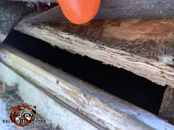 One inch gap between the wood roof sheathing and the fascia needs to be closed up to keep rats out of a house in Dallas Georgia.