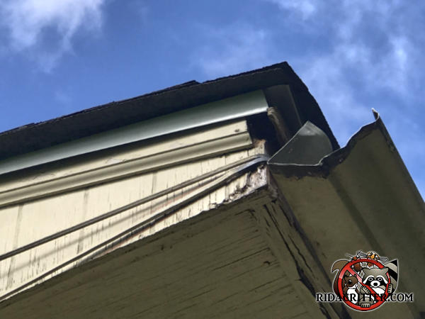 Rats got into a house in Decatur Georgia by walking on electrical wires that entered the house near a roughly two inch gap under the roof flashing and behind the rain gutter.