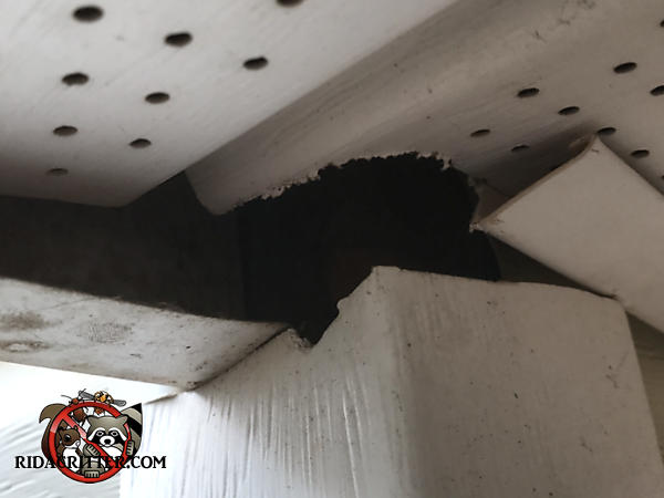 Roof rats chewed through the vinyl exterior trim and soffit panel to get into a house in Decatur Georgia
