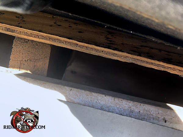 One and a half inch gap in the edge of the roof that allowed rats into the attic of a house in Duluth Georgia