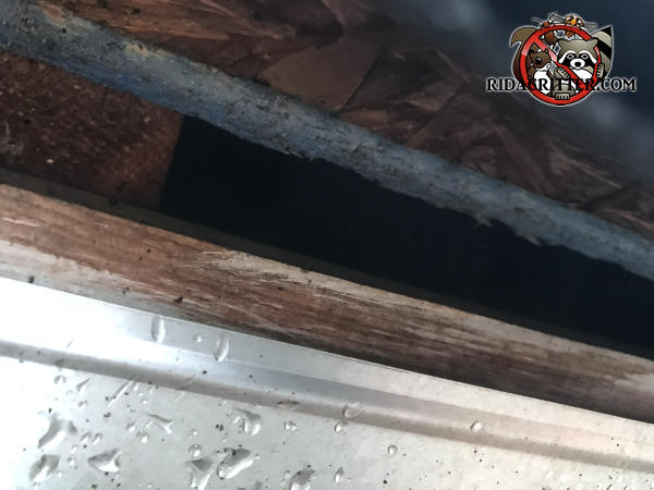 One inch gap between the roof sheathing and fascia behind the rain gutter that needs to be sealed in order to keep roof rats out of the attic of a house in Duluth Georgia