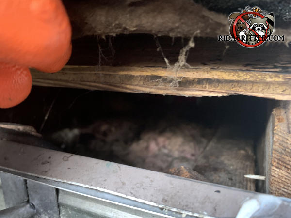 Gap of about two inches between the roof sheathing and the fascia allowed roof rats into the attic of a Fayetteville Georgia home