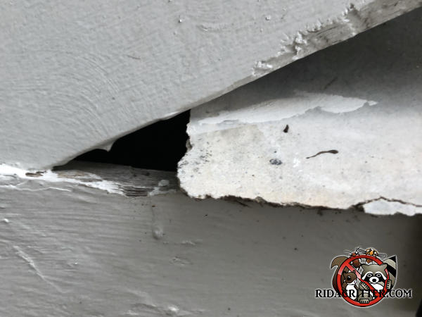 Triangular gap in the roof trim a little more than an inch across at the base needs to be sealed to keep roof rats out of the attic of a Johns Creek Georgia home.