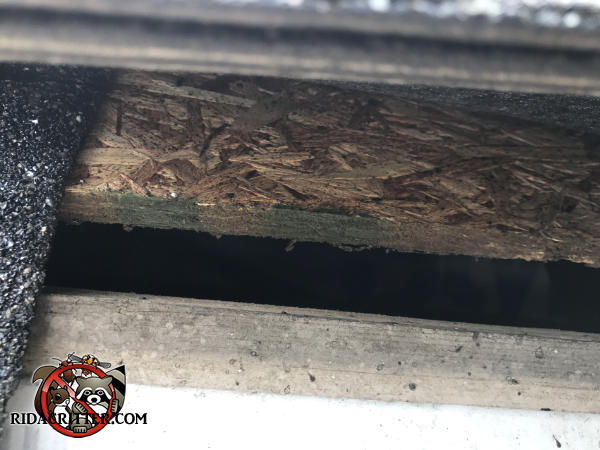 One inch gap between the roof fascia and sheathing of a house in Lilburn Georgia has heavy stains from rats getting into and out of the attic.