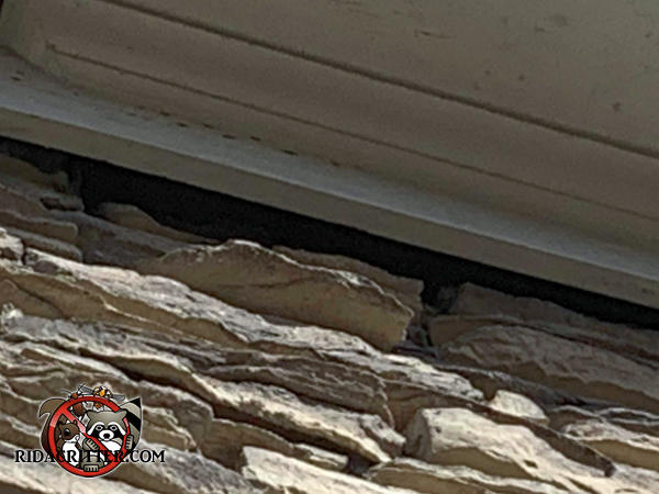 An irregular gap ranging from one to two inches between the soffit trim and the stone wall allowed roof rats into the attic of a house in Kennesaw Georgia