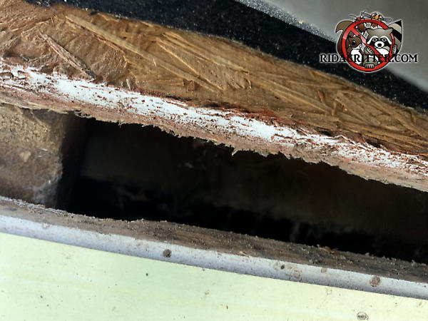 Inch and a half construction gap in the roof that allowed roof rats to infest the attic of a house in Marietta