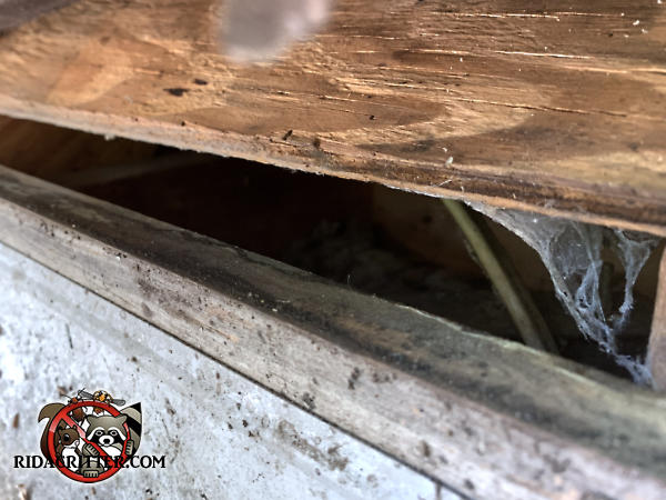 Gap of a little over an inch at the edge of the roof sheathing allowed rats into the attic of a house in Roswell Georgia
