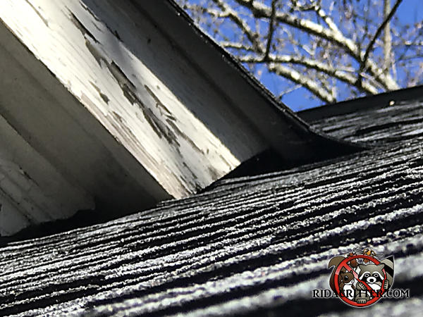 Poor fit between a rafter and the shingles at a roof junction caused a gap that allowed rats into the attic of an Atlanta home