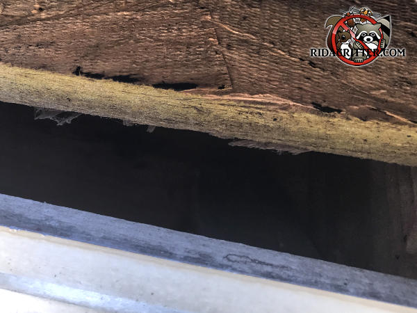 Inch and a half gap between the plywood roof sheathing and the fascia allowed rats into the attic of a house in Signal Mountain Tennessee