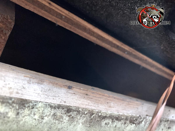 Gap of about an inch and a half between the roof sheathing and the fascia allowed roof rats into the attic of a Snellville Georgia home