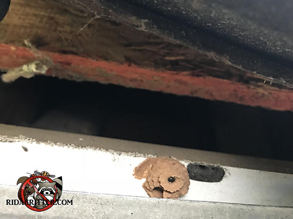 Inch and a half gap in the edge of the roof allowed rats into the attic of a house in Suwanee Georgia