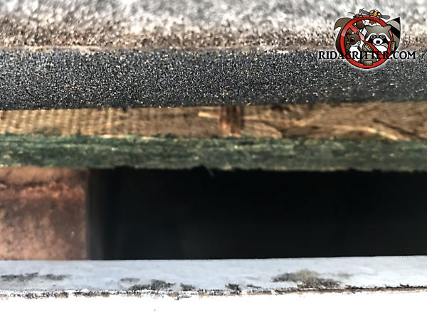 Gap of slightly over an inch in the edge of the roof sheathing of a house in Suwanee Georgia allowed rats into the attic