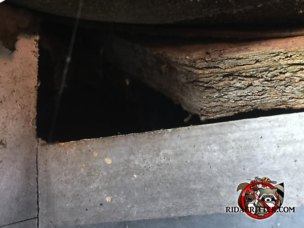 Small gap in the corner of the roof sheathing allowed roof rats into the attic of a house in Taylorsville Georgia
