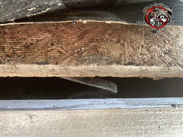 One inch gap between the roof sheathing and fascia that needs to be sealed to keep roof rats out of the attic of a house in Woodstock Georgia