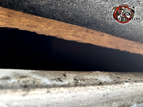 Gap of about an inch and a half between the roof sheathing and the fascia allowed rats into a house in Woodstock Georgia