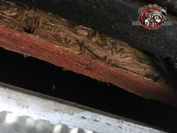 Staining around a one inch gap in the edge of the roof indicates that rats have been using the gap to get into the house for a long time