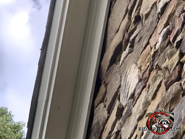 Gaps between the stone walls and the roof trim that allowed roof rats into the attic of a house in Young Harris Georgia need to be sealed to keep the rats out