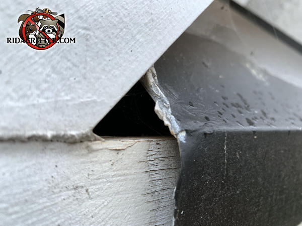 Small triangular gap under the flashing allowed roof rats into a house in Acworth, Georgia