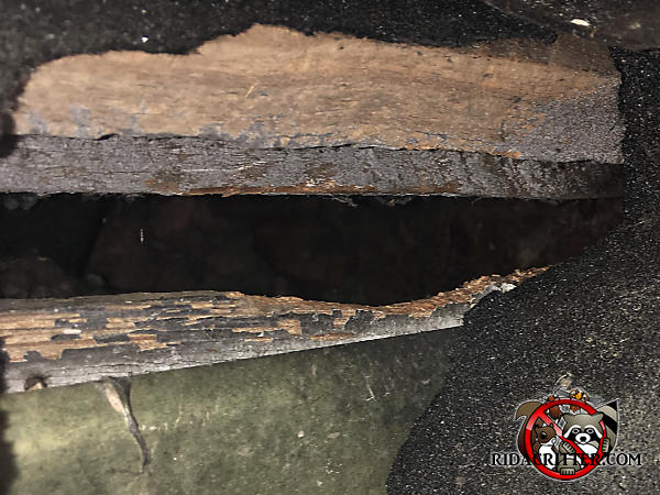 Roof rats gnawed the bottom edge of a gap in the edge of the roof of a house in Atlanta. The hole is very worn and has heavy rub mark stains.