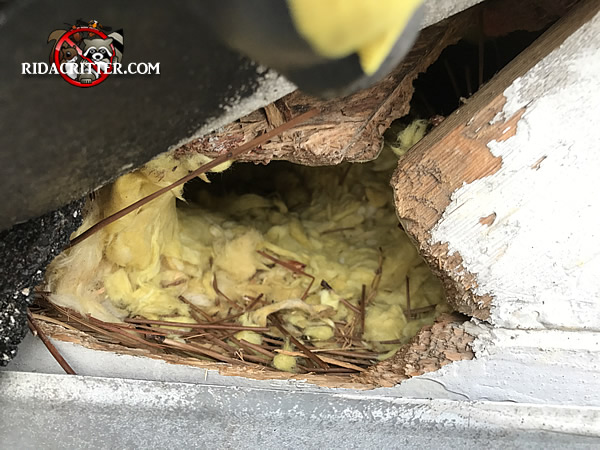 Rat Removal And Extermination In North Georgia