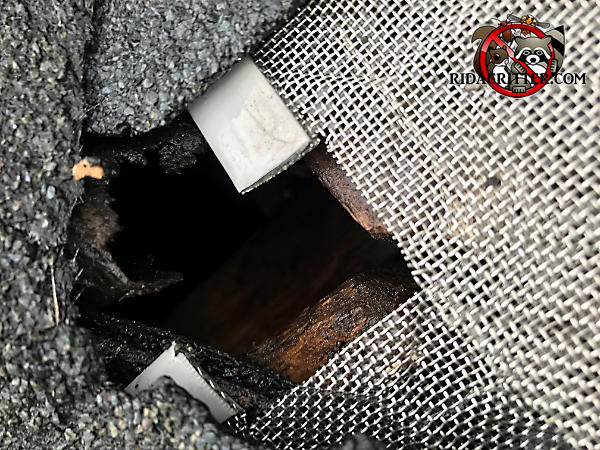 Roughly square hole that roof rats gnawed through the shingles and into the attic of a house in Johns Creek Georgia where the metal mesh didn